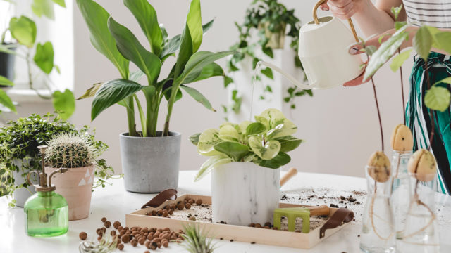Benefits of having plants in your home